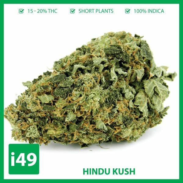 buy hindu kush online