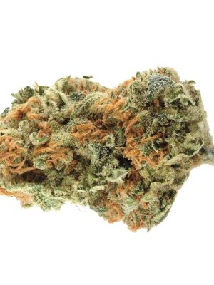 buy northern light marijuana online