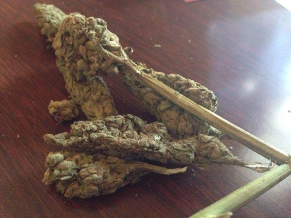 Jamaican Strain