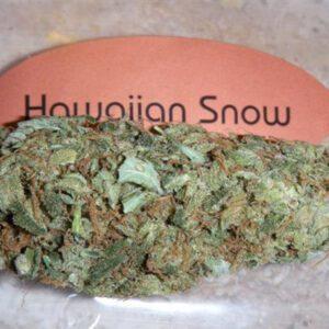 hawaiian snow strain